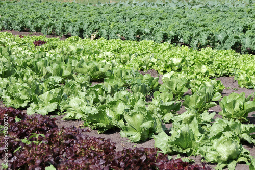 Photo  salate