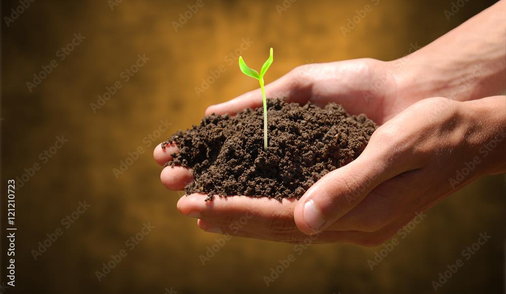 Fototapeta Mano con terra e germoglio