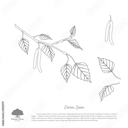 Carta da parati The contour image of birch branches on a white background . Isol