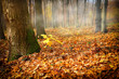 Misty morning in autumn forest with fallen leaves