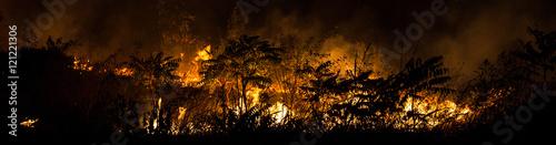 пожар горит в лесу