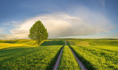 Panel Szklany Wiejski Wiosenne ,zielone pole młodego zboża