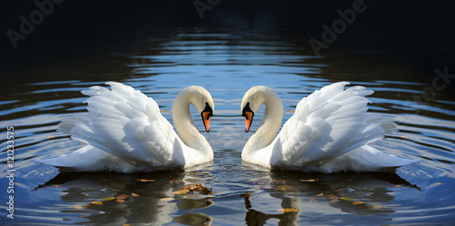 Poster de jardin Cygne Swan in the lake