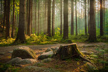 Beautiful Rays Of Morning Sunlight In Green Forest.