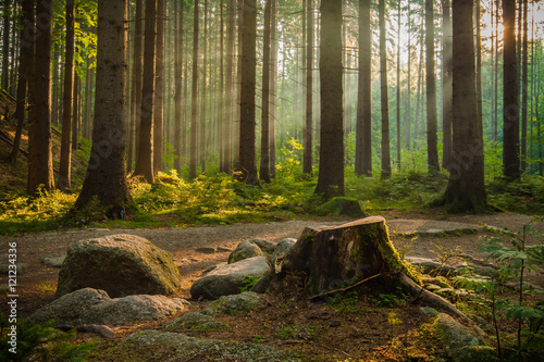 Foto auf Gartenposter Wald Beautiful rays of morning sunlight in green forest.