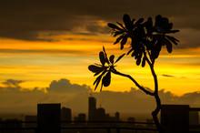 Orange Manila Sunset Clouds And Skyscraper Silhouettes, With Kalachuchi Tree