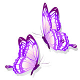 Fototapeta Motyle - color butterflies,isolated on a white
