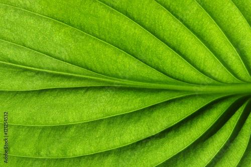 Türaufkleber Makrofotografie Close up on green leaf