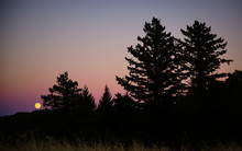 Full Moon Rising In Purple Silhouette Forest - Long Ridge Open Space Preserve, Santa Cruz Mountains