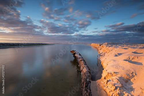 In de dag Zwart A root in the Piasnica river near Debki village at sunset time. Baltic sea. Poland. Long exposure.