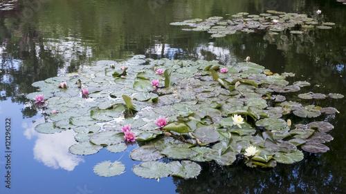 Foto  Le Bassin aux nymphéas des jardins de Claude Monet à Giverny (France)