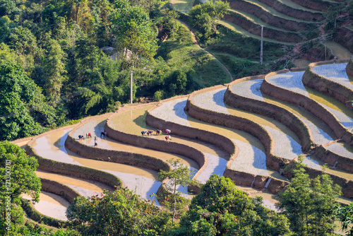 Tuinposter Rijstvelden Farmer is planting rice on terraced field for new season