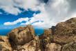 Top view on Famara coastline. Lanzarote. Canary Islands. Spain