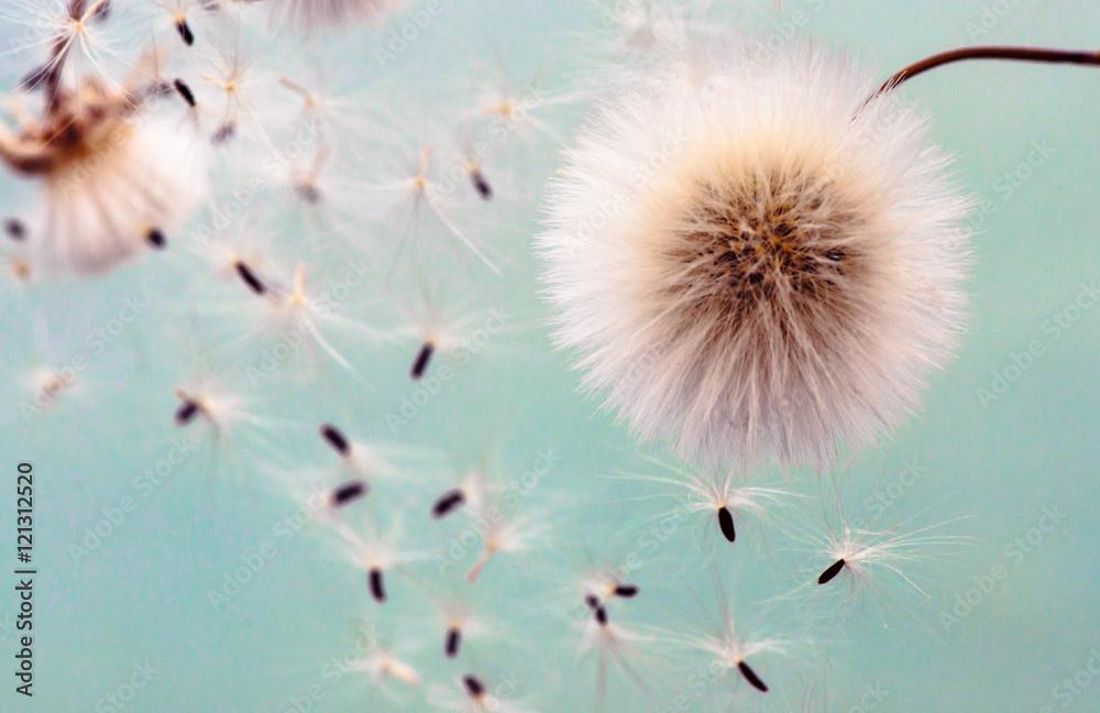 Fototapety, obrazy: fluff