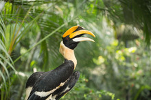 Great Hornbill Bird Holding