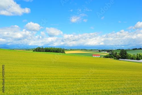 Cadres-photo bureau Jaune Landscapes of Countryside in Hokkaido, Japan