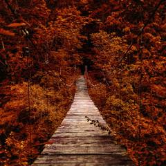 Fototapeta Suspension bridge