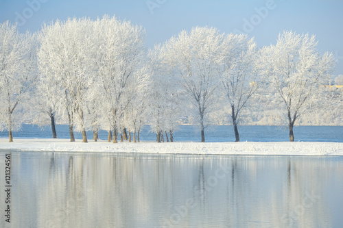 Fototapety, obrazy: Frosty winter trees