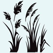Silhouette Reed Isolated On Wh...