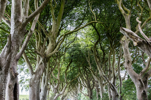 Keuken foto achterwand Noord Europa Magical forest, Northern Ireland