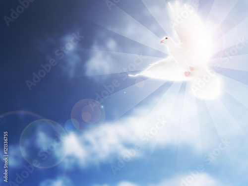 Cuadros en Lienzo  Dove in the Sky Funeral Image
