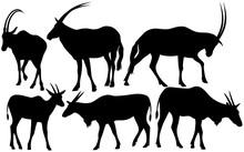 Antelopes Black  Silhouettes Vector Design Set
