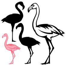 Flamingo Birds Vector Design Set