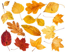 Collage From Various Autumn Leaves Isolated