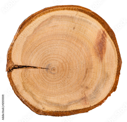 annual rings in cross section of plum tree trunk