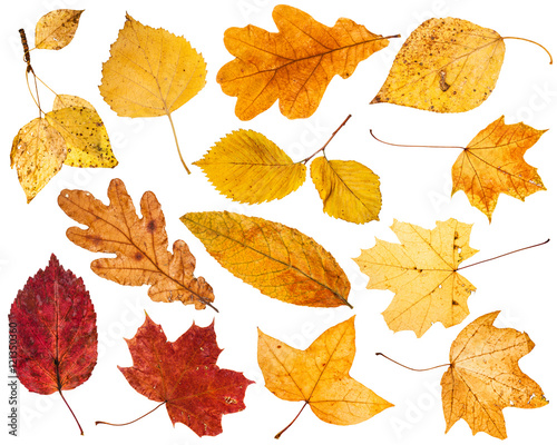 Photo collage from various autumn leaves isolated