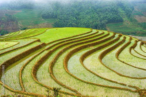 Fotobehang Rijstvelden Beautiful terraced rice field in Hoang Su Phi in Vietnam