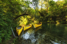 Yellow Kayaks On The River Cetina, Surrounded By Green Trees, Omis, Croatia