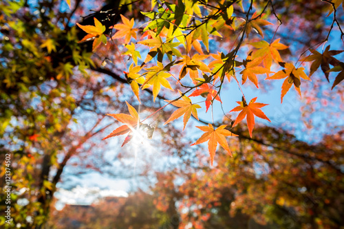 Photo  autumn Background