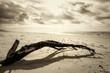 Konar na plaży