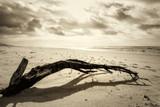 Fototapeta Fototapety z morzem - Konar na plaży