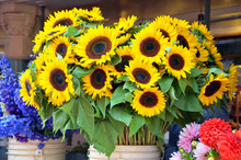 Sunflowers On Display At Market