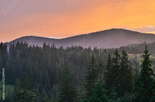 Foto op Canvas Lavendel Carpathian mountains in the west part of Ukraine