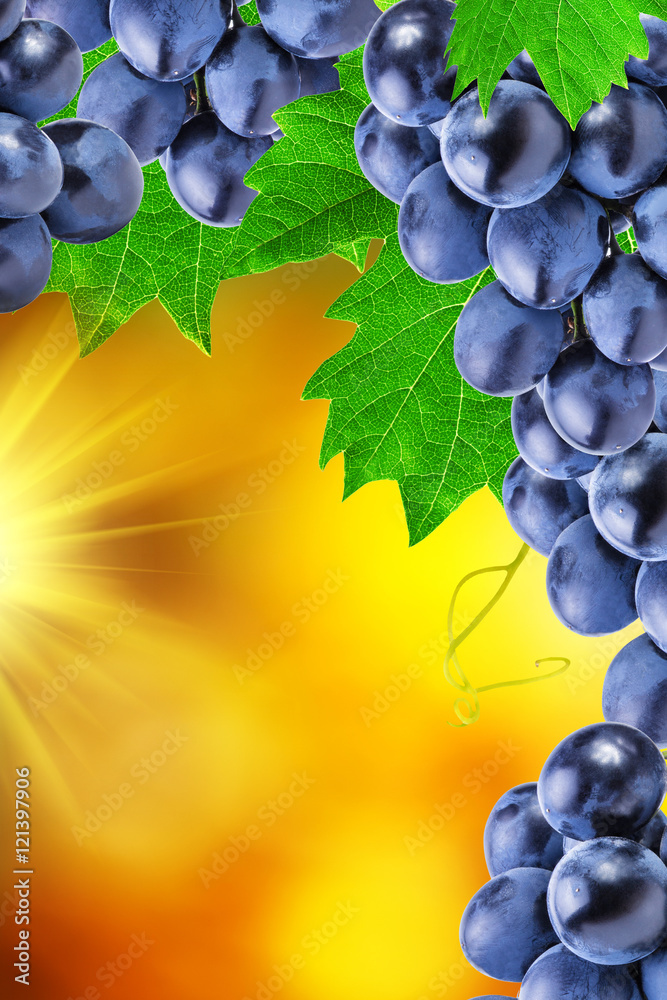 Fototapety, obrazy: grapes on an abstract background of autumn
