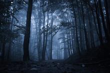 Spooky Misty Rainy Forest, Loc...