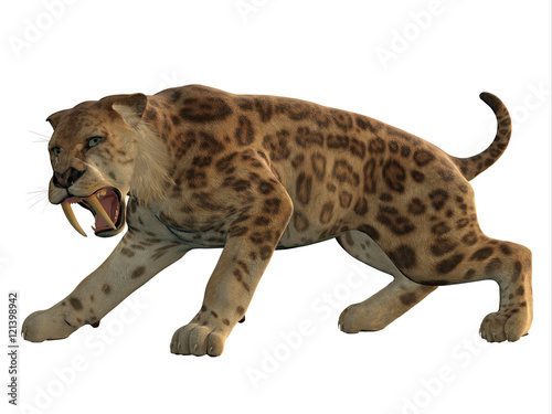 Photo  Saber-Tooth Cat Angry - Saber-Tooth Tiger was an extinct large carnivore that lived worldwide during the Eocene to Pleistocene Eras