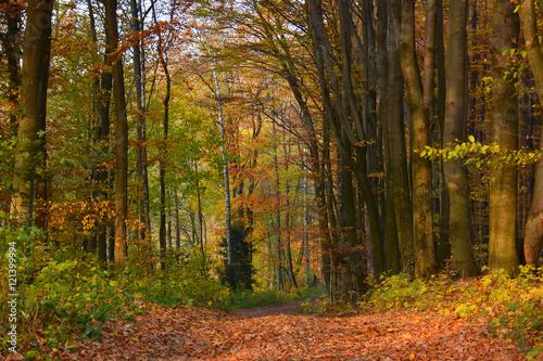 Deurstickers Herfst Road in autumn forest