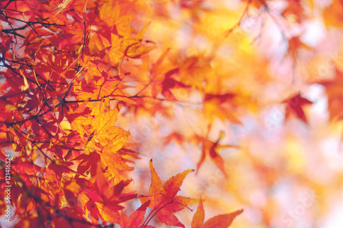 Spoed Foto op Canvas Natuur Fall Background