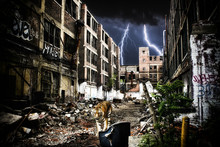 Urban Tiger Apocalypse. A Tiger Walking Through Urban Ruins In A Post-apocalypse Like Setting.