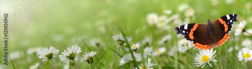Foto op Canvas Pistache Blumen 695