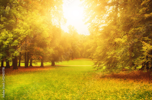 Photo  Autumn sunny park with orange trees and meadow , natural seasonal background