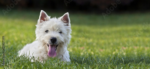 Website banner of a funny dog puppy as looking  in the grass Canvas Print