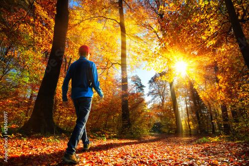 obraz lub plakat Walking im Wald bei herrlichem Sonnenschein
