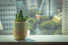 Cactus In Pot On Frame Window ...