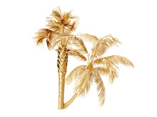 Coconut Palm Trees. 3D Rendering
