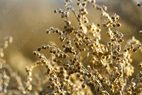 roslina-jesienia